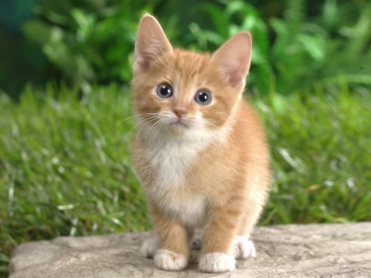 41633-cats-cute-cat